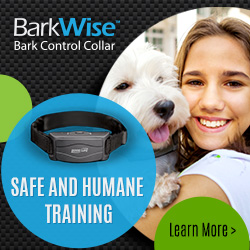 Small No Bark Collar